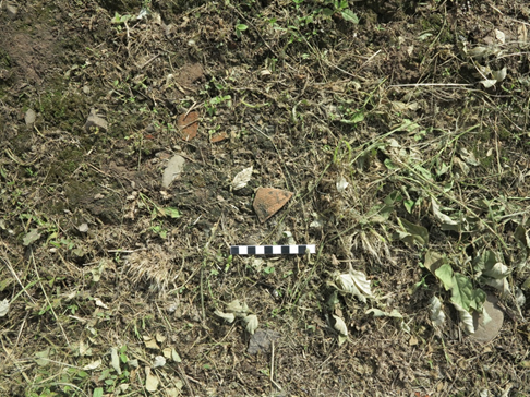 本計畫調查下馬厝遺址發現牛罵頭文化之陶片